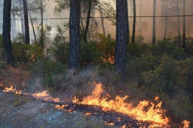 Marmaris'teki orman yangınında son durum! Karayolu ulaşıma kapatıldı