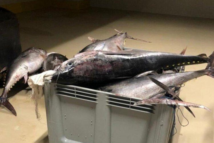 Yasak dönemde avlanan balıklara el konuldu!