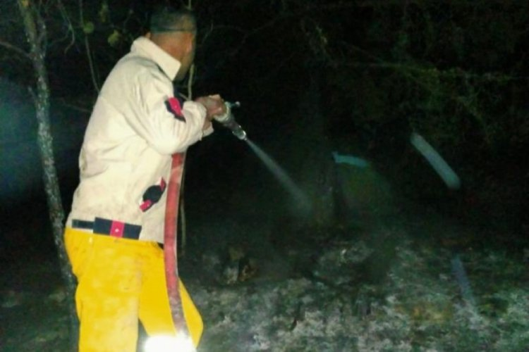 Samsun ve Ankara'da orman yangını haberi yalanlandı