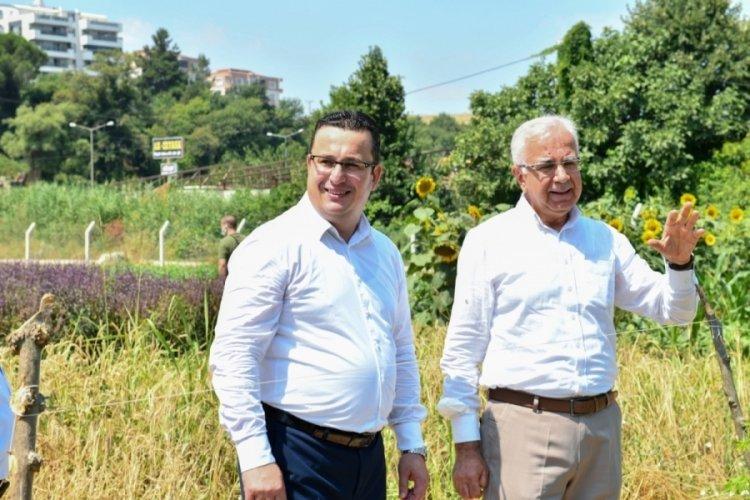 Bursa'da tıbbi ve aromatik bitkiler bahçesi örnek olacak