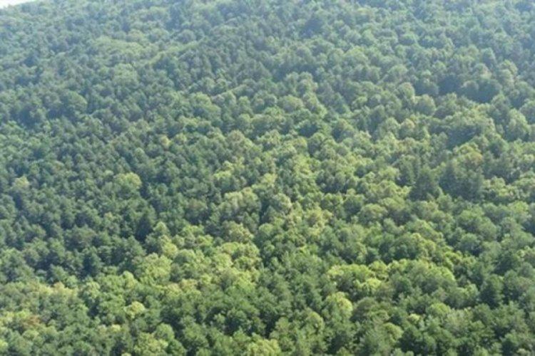 Elazığ'da ormanlık alanlara giriş 2 ay yasaklandı
