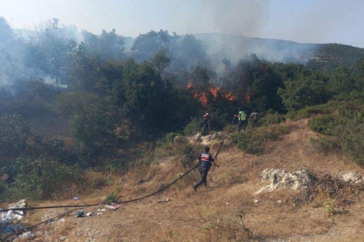 Balıkesir'de orman yangını: 20 dönüm alan kül oldu