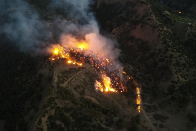 Manisa Salihli'de orman yangını