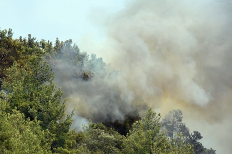 Muğla Dalaman'daki yangın kontrol altında