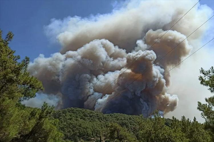 Bursa Teknik Üniversitesi'nden orman yangınlarıyla ilgili rapor