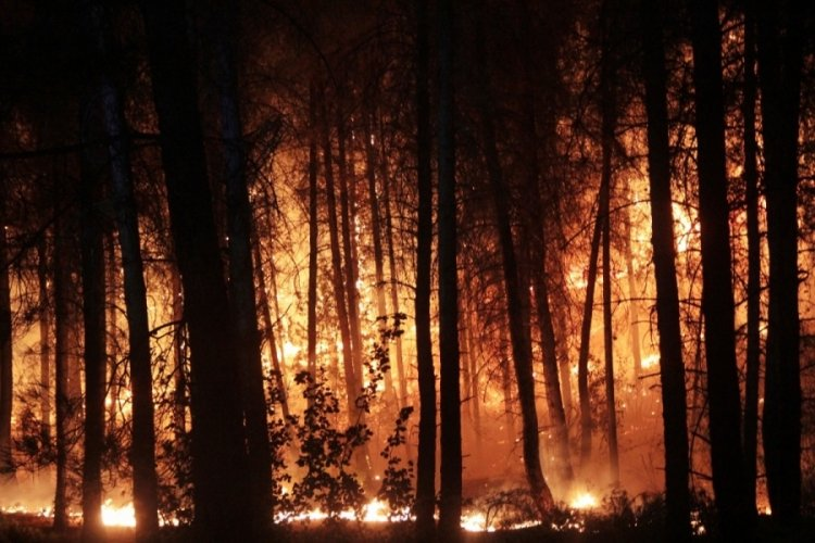 Orman yangını geceyi gündüze çevirdi