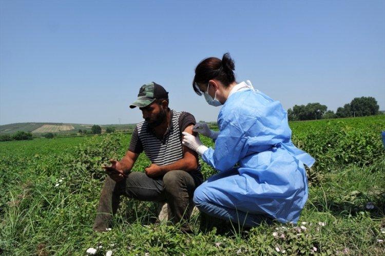 Bursa Karacabey Ovası'nda hasat yapan işçiler koronaya karşı aşılandı