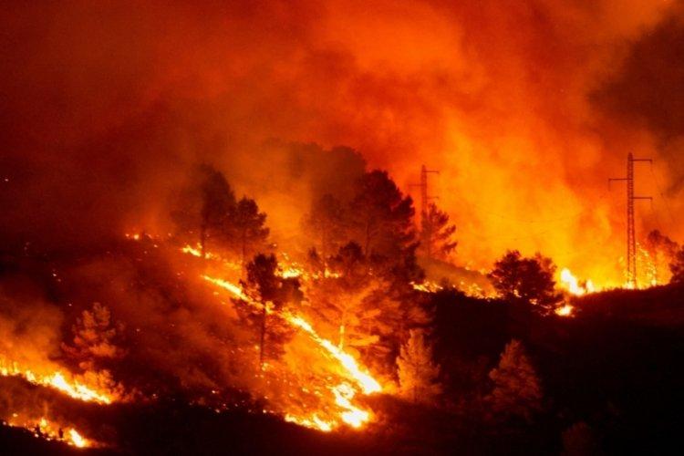 Dünya alevlere teslim oldu! Dört bir yanda orman yangını var