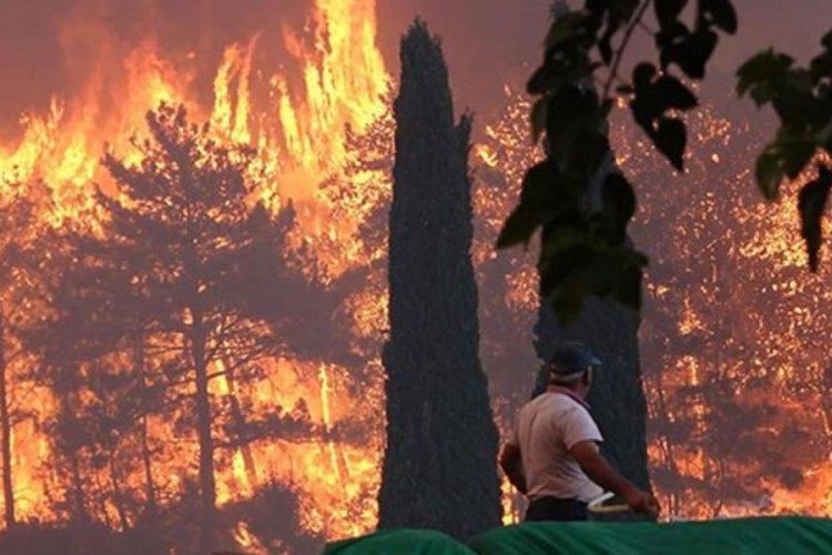 Sosyal medya bunu konuşuyor! Uzmanlar kızılçam ağaçları hakkında gerçeği açıkladı
