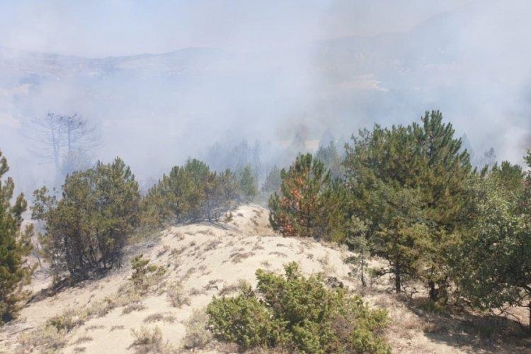 Ankara'da ormanlık alanda korkutan yangın