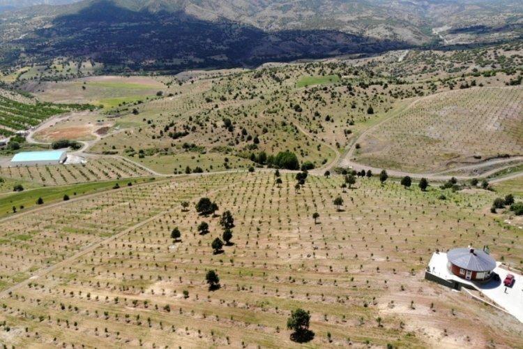 İstanbul'u terk edip kendini ceviz ağaçlarına adadı