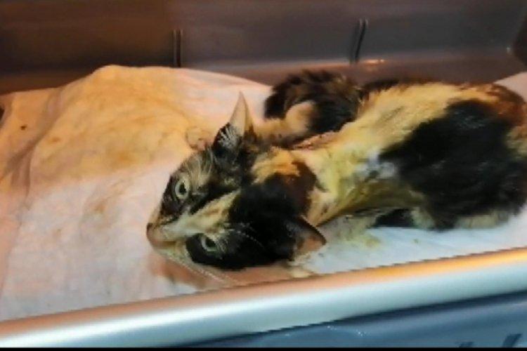 İstanbul Esenler'de kedilere işkence! Bacaklarını ve kuyruklarını kestiler