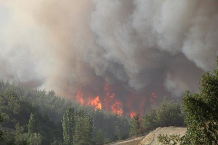 Denizli'de 5 orman yangını tamamen söndü!