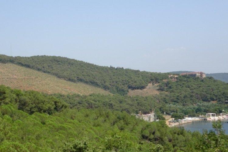 Heybeliada'da geçen yıl küle dolan ormanlık alan görüntülendi