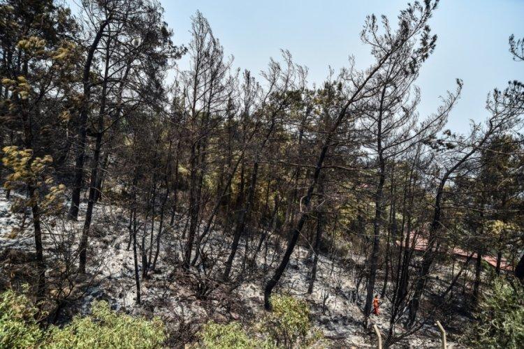 Orman yangınlarını önlemek için yapılması gerekenler