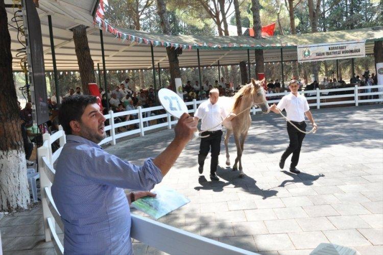Bursa'da Arap taylarının satışından 8,5 milyon lira gelir elde edildi