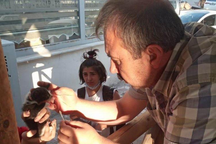 Bursa'da gözüne ağaç parçası batan sokak kedisini belediye başkanı kurtardı
