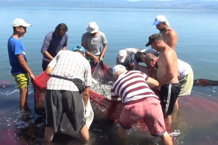 Bursa İznik Gölü'nde gümüş balığı popülasyonu balıkçıları tedirgin ediyor