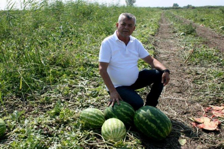 Bursa'da yüzü gülen karpuz tüccarından çiftçiye hediye