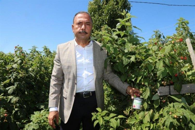 Bursa'da meyve düşmanı sinekler tuzakla yakalanacak