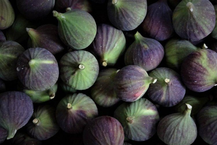Dünyada sadece Bursa'nın 40 köyünde yetişen siyah incirin yolculuğu başladı