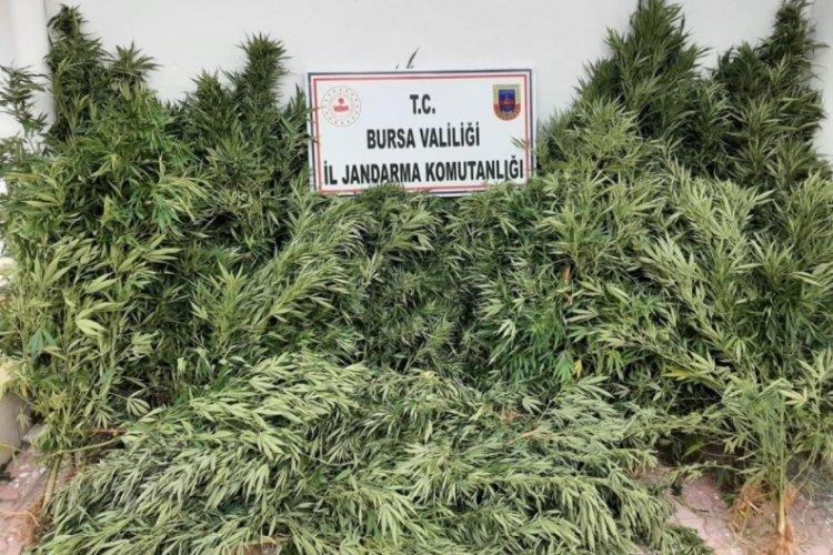 Bursa'da uyuşturucu operasyonu! 2 şüpheli yakalandı