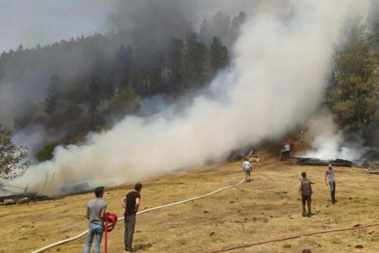 Balıkesir Dursunbey'de orman yangını!