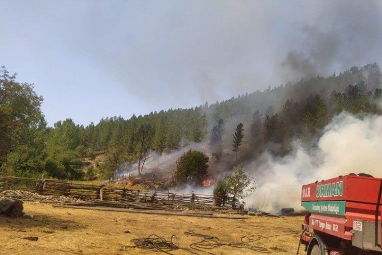 Balıkesir Dursunbey'deki orman yangını kontrol altında
