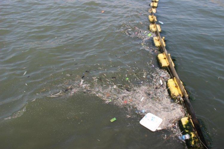 İzmir'de ölü balıklar sahile vurdu