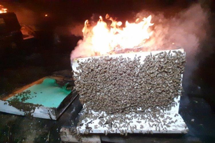 Edirne'de çıkan yangında binlerce arı telef oldu