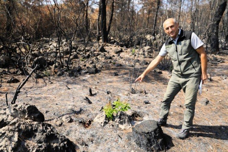 Antalya'da yanan ormanda 7 bitki türü filizlendi