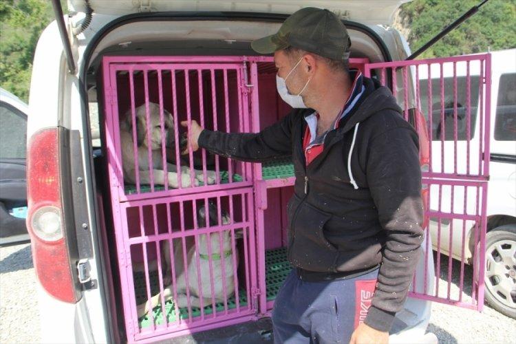 Sinop'ta selden 20 köpeği kurtardı