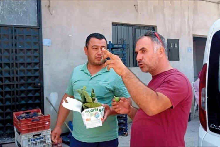 Bursa Mudanya Tarım Müdürlüğü, çiftçilere zararlılarla mücadeleyi anlattı