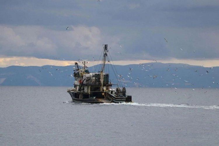 Marmara Denizi'nde hamsi, istavrit ve sardalya avı için karar