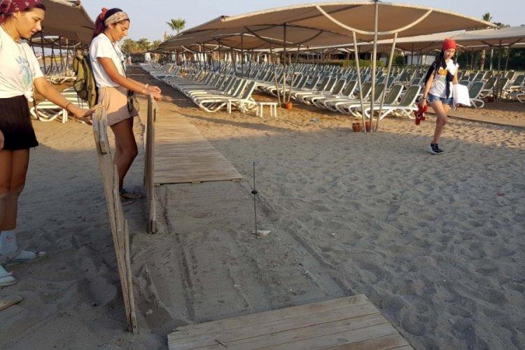 Caretta caretta sahilinde katliam! Soruşturma başlatıldı
