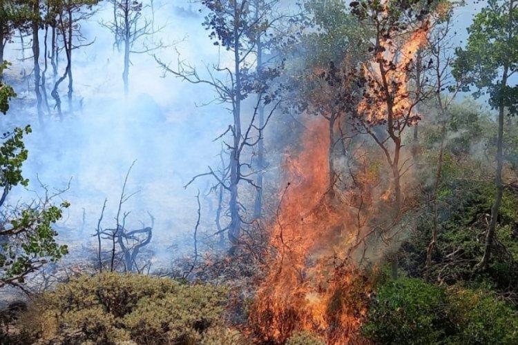 Nemrut Krater Gölü çevresinde yangın