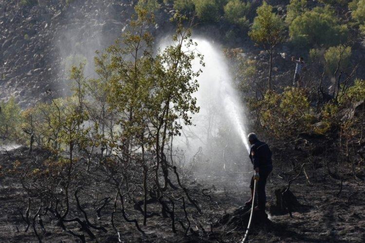 Nemrut'a çıkan yangın kontrol altına alındı