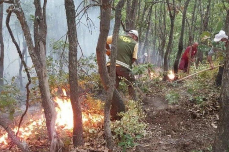 OGM açıkladı: Yurt genelindeki orman yangınlarının 6'sı kontrol altında
