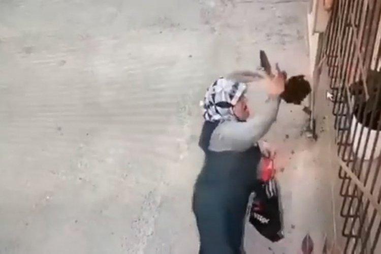 Bursa'da yaşlı kadın, camdaki çiçeği söküp çaldı