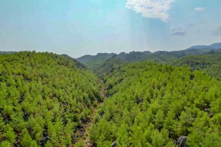 Manavgat'ta 13 yıl önce yanan orman yeniden yeşillendi