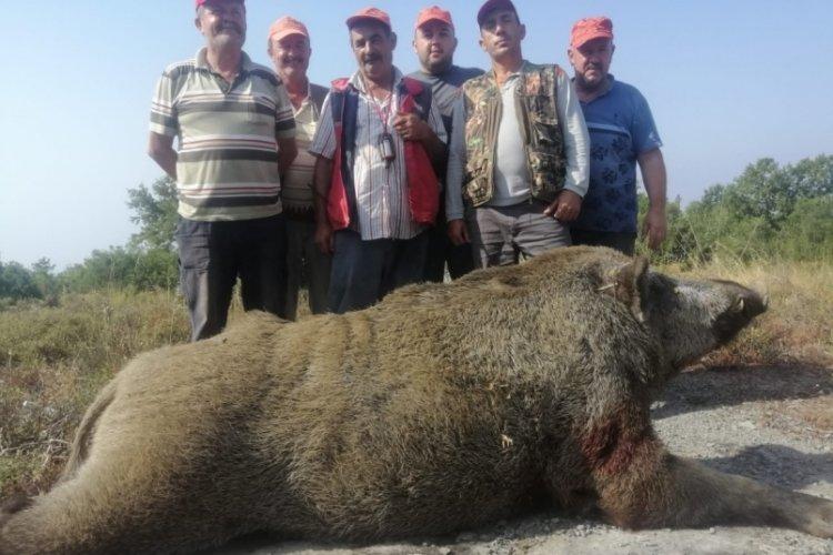 Bursa'da tarlalarına dadanan 400 kiloluk domuzu vurdular