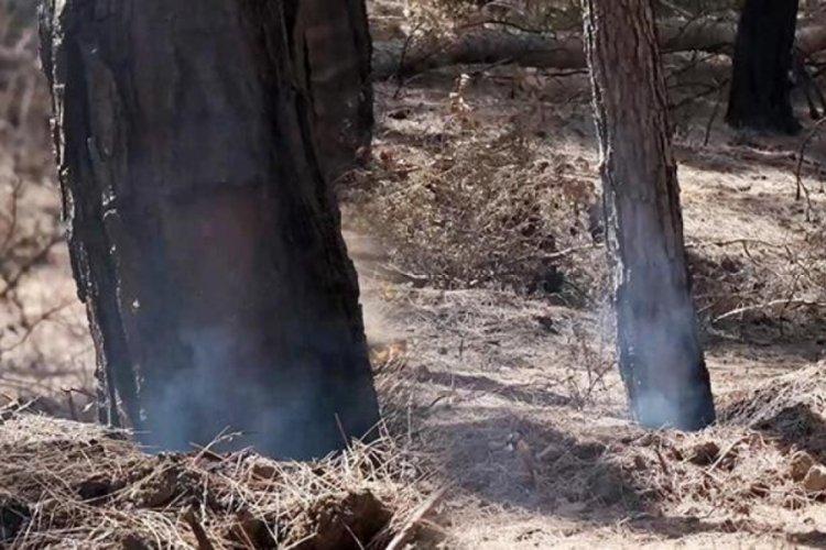 Antalya'da çıkan yangının hala duman tütüyor!