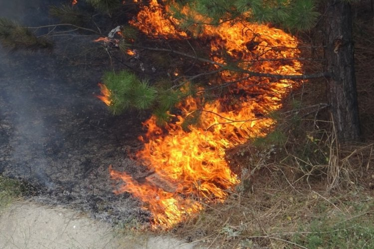 Bursa'da otoyol girişindeki ağaçlık alanda yangın