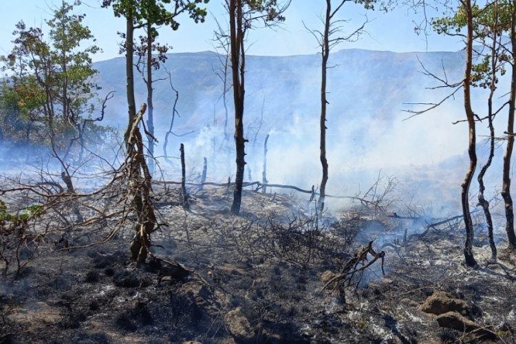 Nemrut Krater Gölü çevresindeki yangın kontrol altına alındı