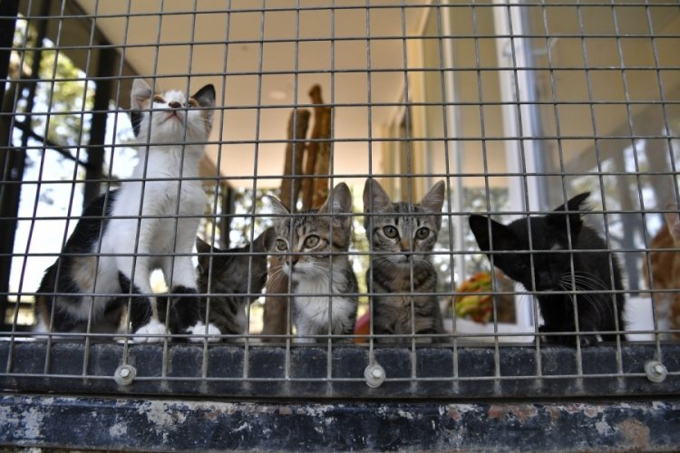 Bursa'da yavru kediler sahiplenilmeyi bekliyor