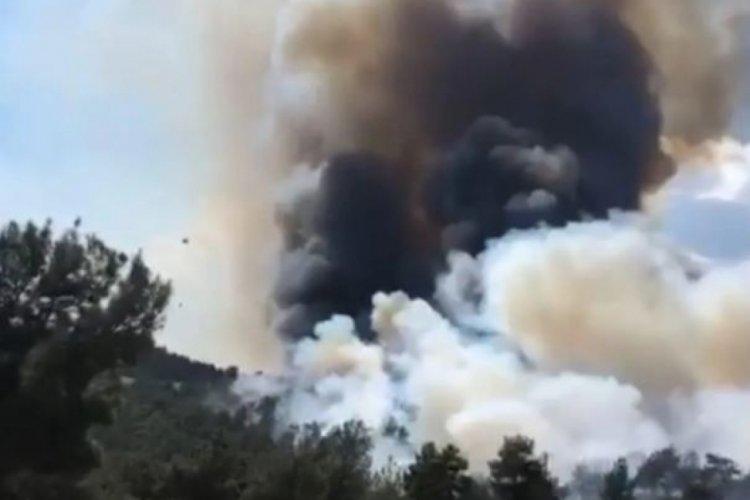 Çanakkale Bayramiç'te orman yangını