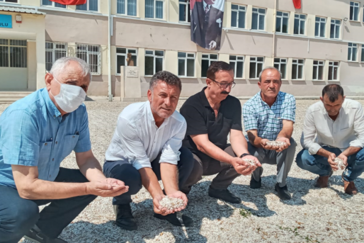 CHP Bursa Milletvekili Orhan Sarıbal: Çerezlik ayçiçeği üreticisi perişan