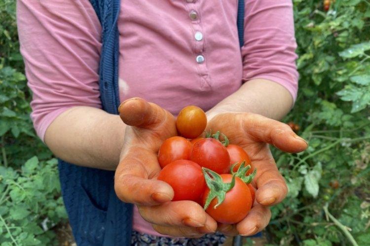 Sebze ve meyve fiyatları son 6 yılın zirvesinde