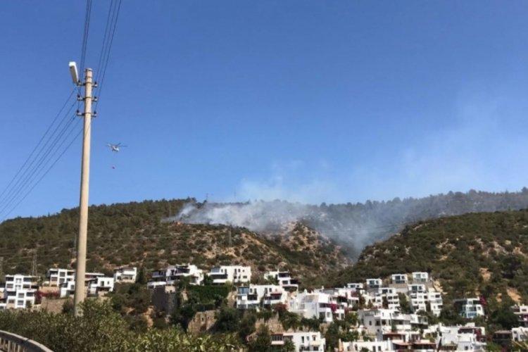 Bodrum'da orman yangını! Kontrol altına alındı
