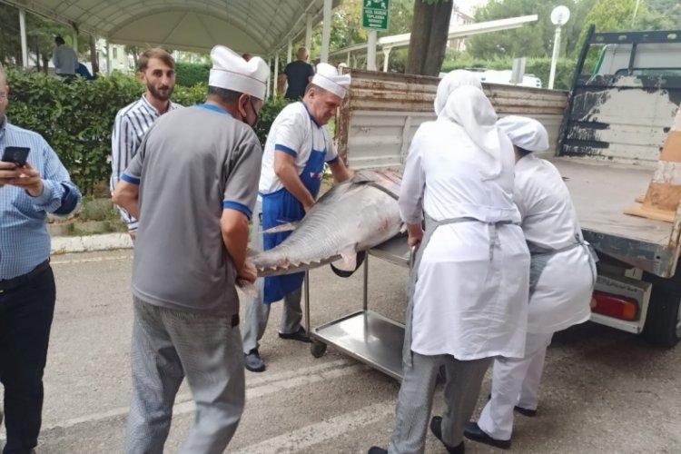 Bursa'da balık sezonu sıkı denetimle başladı